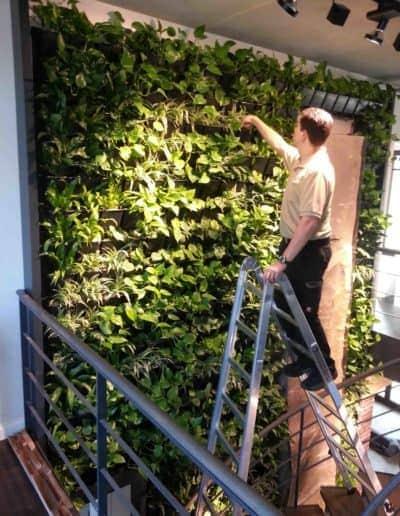 Aufbau und Kontrolle für die Einrichtung einer grünen Wand