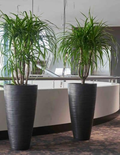 Iron Curved Vase