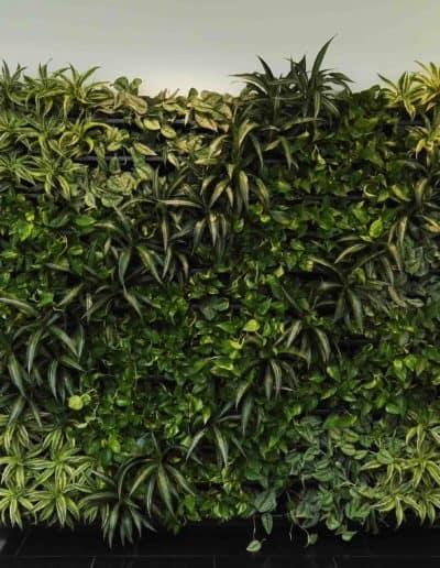 Die grüne Wand in den Abmessungen 2,50 m x 2,25 m