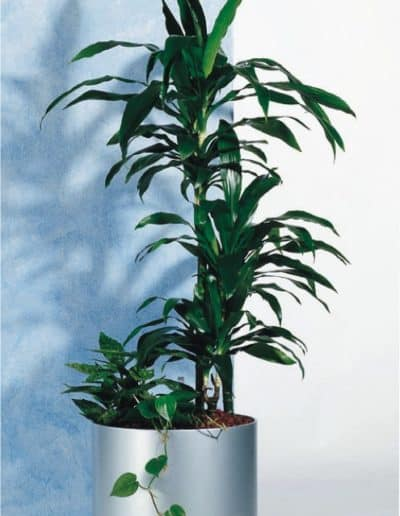 Kunststoff rundes Pflanzengefäß D