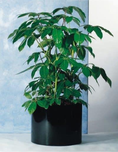 rundes Pflanzengefäß Dynamik