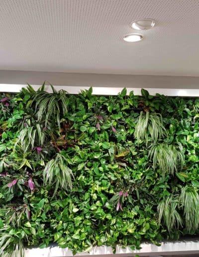 Projekt: Grüne Wand mit umlaufenden, lackierten Rahmen aus Edelstahl