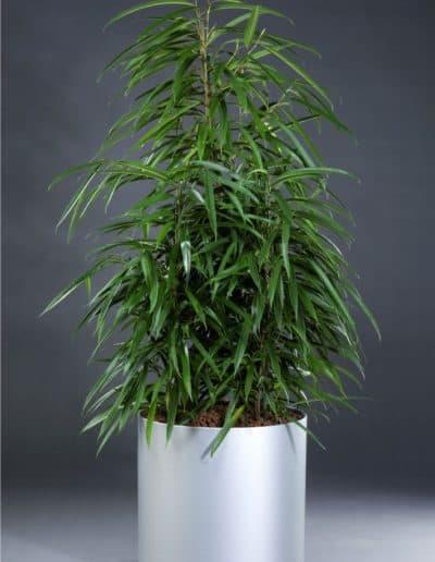rundes Pflanzengefäß Dynamik aus Kunststoff