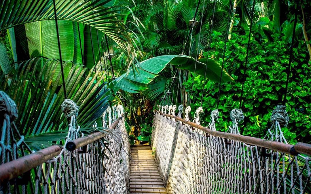 Büros im Regenwald mit 40.000 Pflanzen