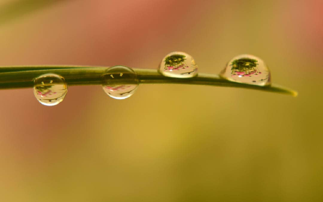 Biologischer Pflanzenschutz oder doch lieber Chemie für die Büropflanze