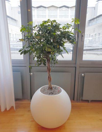 Pflanzentopf-rund-weiss